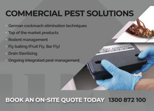 Commercial Pest Control Gold Coast