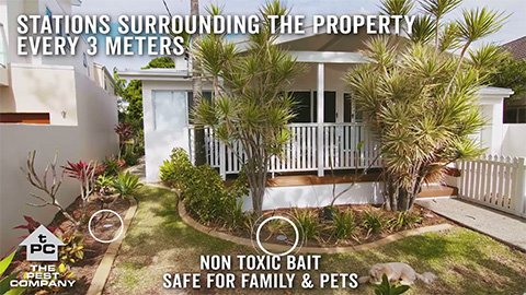 non toxic bait safe for pets and family