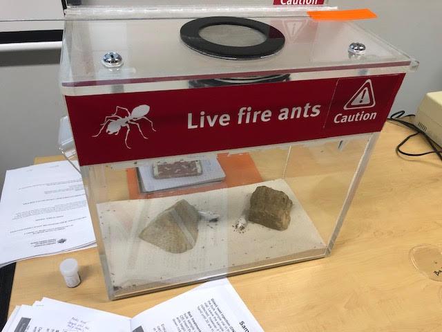 Live Fire Ants Brisbane