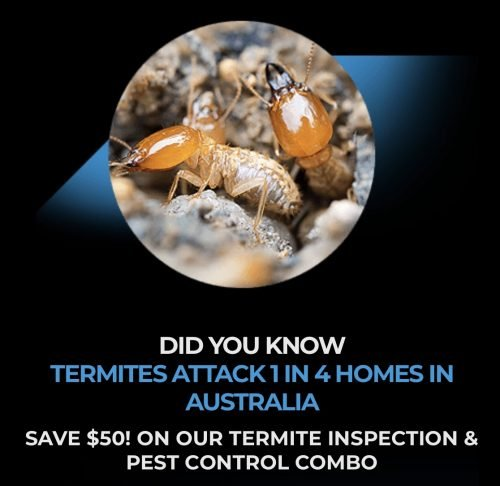 Termites South East Queenland