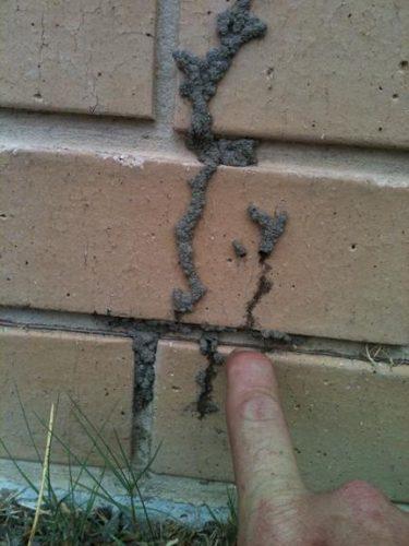 Termite Entry