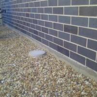Termite-Management
