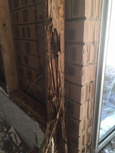 Termite damage on the Gold Coast