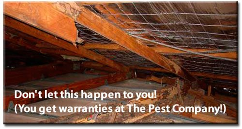 The Pest Compnay warranty