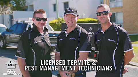 licensed termite team