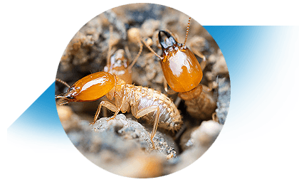 Termite Inspections Tweed