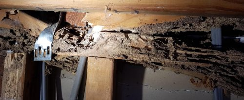 Termite Damage costs